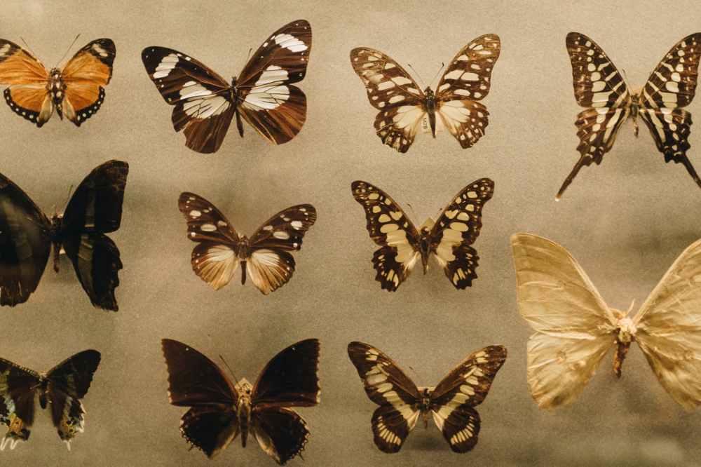 photo of assorted butterflies