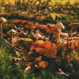 Photo by Tom Swinnen on Pexels.com