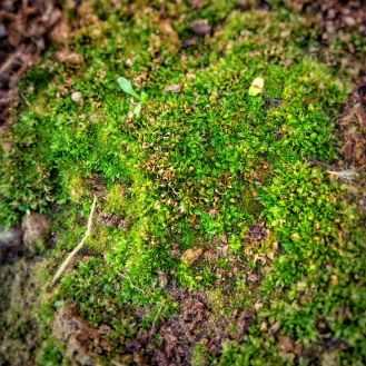 Photo by Anuj Singh on Pexels.com